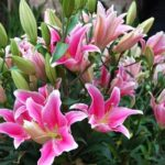Thuduc Agromarket – Rực Rỡ Sắc Hoa